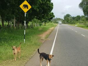 hunder og elefanter i veien