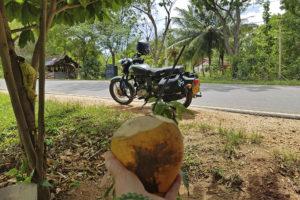kokosnøttstopp