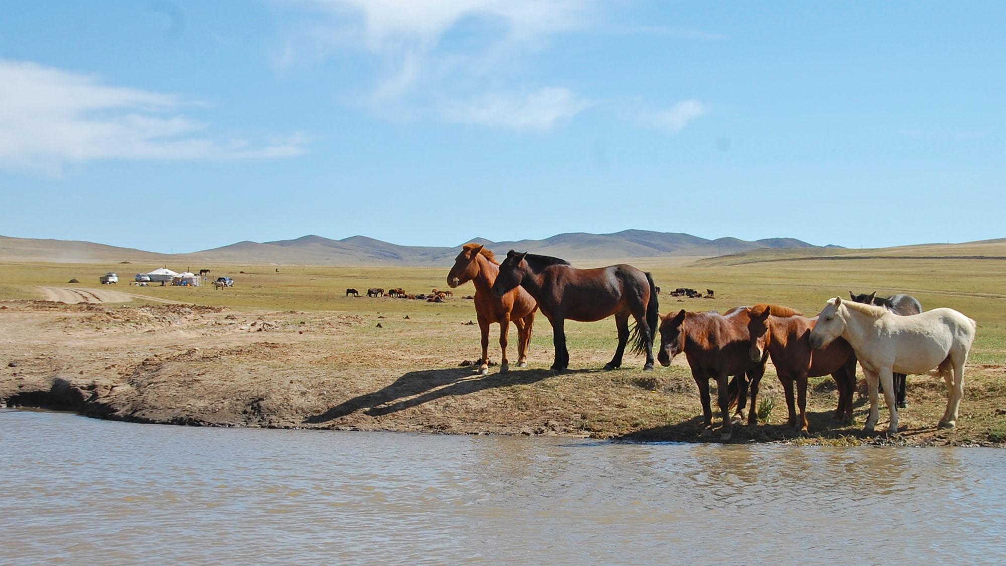 Mongolia i et nøtteskall: hester og ger.
